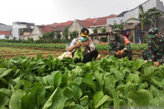 Polisi manfaatkan lahan kosong Cengkareng jadi kebun sayur