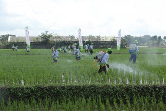 Pupuk Indonesia uji coba pupuk organik cair Phonska Oca