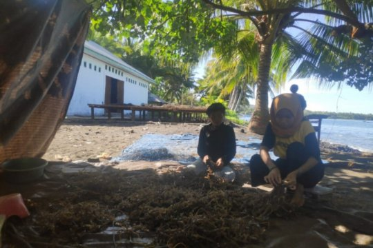 NTT salurkan bantuan peralatan budi daya rumput laut untuk 4.050 orang