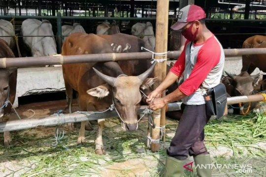 Belasan hewan kurban tidak layak jual di Jakarta Timur