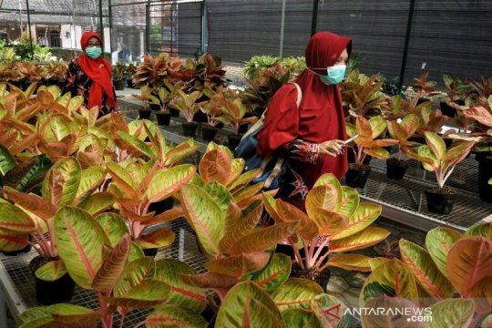 Wakil Ketua MPR sebut Indonesia berpotensi besar ekspor aglaonema