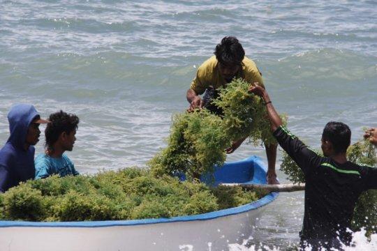 KKP latih warga buat mi dari rumput laut untuk cetak wirausahawan baru