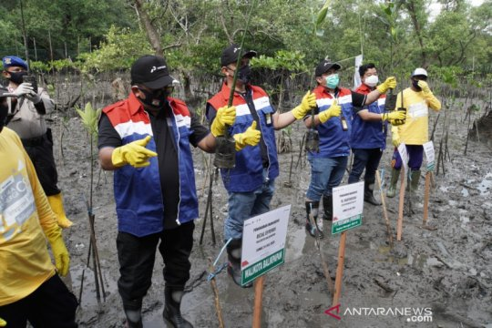 Pertamina tanam 2.000 bibit mangrove di pesisir Balikpapan