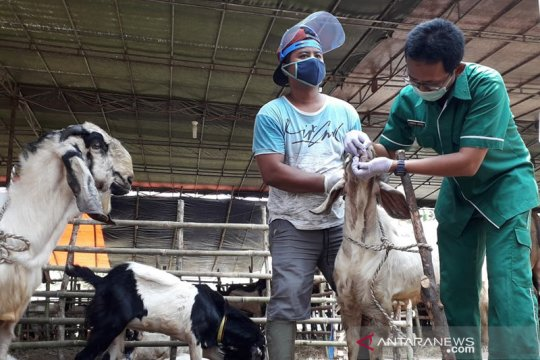 Penjualan daring picu pengurangan penampungan hewan kurban di Jakpus