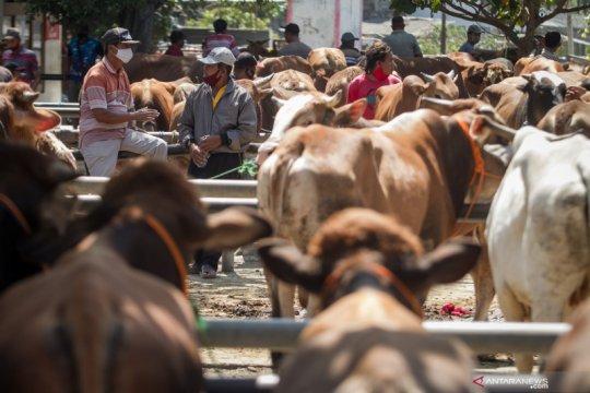 Peneliti sarankan pembelian hewan kurban secara daring