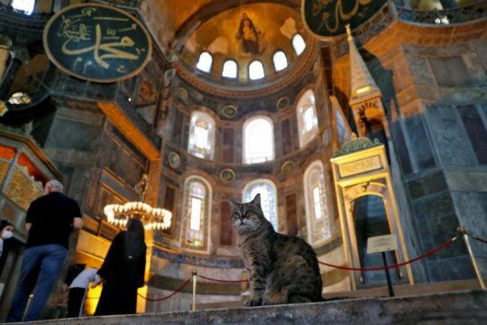 Rumahnya ganti fungsi, Gli si kucing tetap jadi penghuni Hagia Sophia