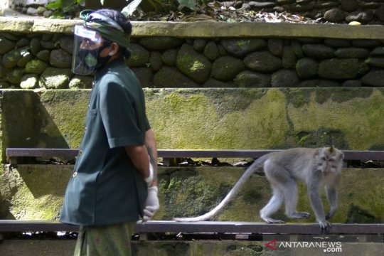 Obyek wisata Monkey Forest di Ubud belum dibuka untuk wisatawan