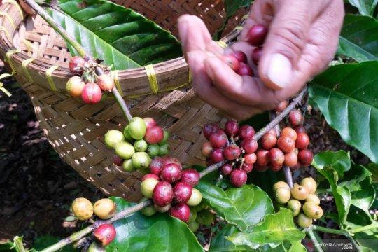 Industri olahan kopi ekspor 4,82 ton ke China