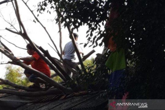 Atap dua rumah di Jatinegara rusak tertimpa batang beringin