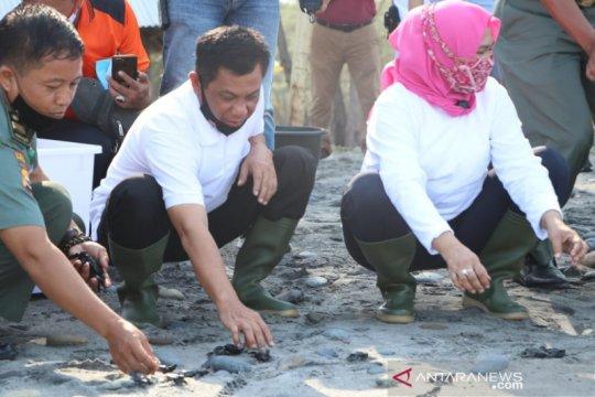 Kapolda Bengkulu lepaskan 275 ekor bayi penyu di Pantai Pandan Wangi