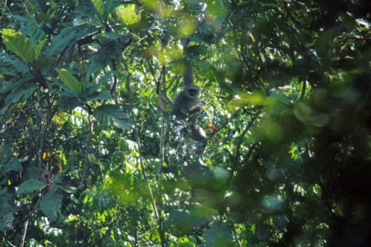 Sejumlah satwa langka endemik ditemukan di pegunungan Sanggabuana