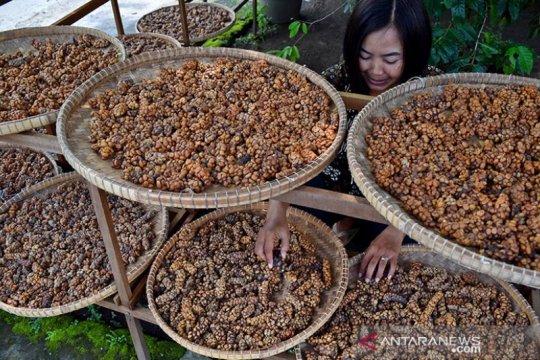 TETO dorong Indonesia manfaatkan pasar konsumen kopi di Taiwan