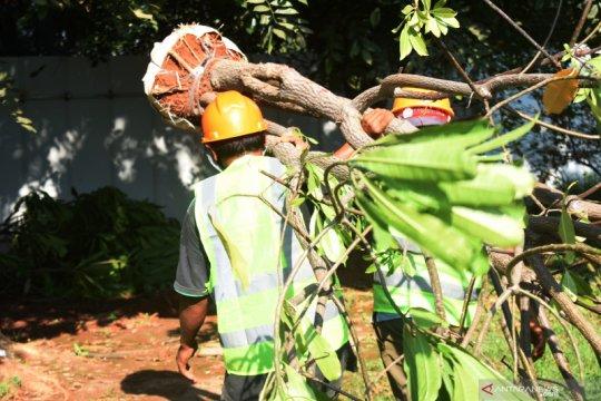 Jakpro pindahkan 382 pohon dari Taman BMW