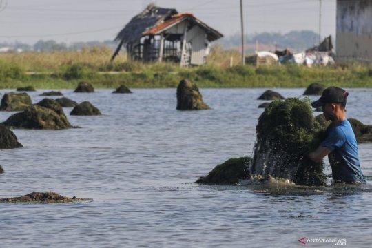 KKP siapkan industri pakan alami zooplankton dongkrak hasil perikanan