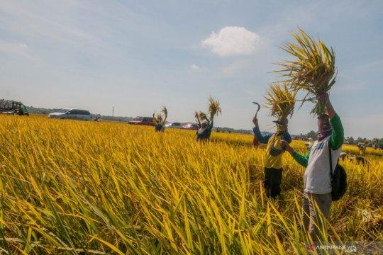 Musim kemarau, pemerintah perlu waspada stok beras hingga akhir tahun