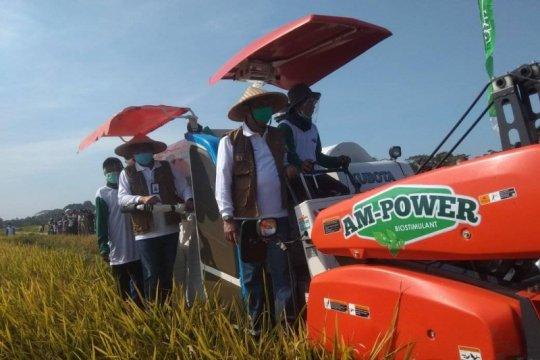 Buwas optimistis swasembada pangan terealisasi