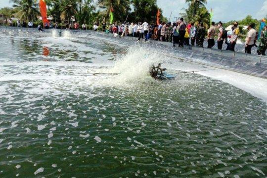 Budi daya udang vanamei harapan baru petambak Lampung Timur
