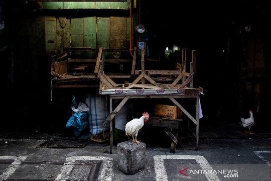 Filipina musnahkan hampir 39.000 ekor ayam cegah wabah flu burung