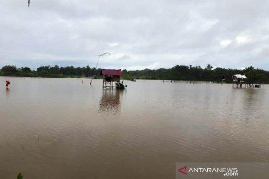 958,25 hektare sawah di Aceh terendam banjir