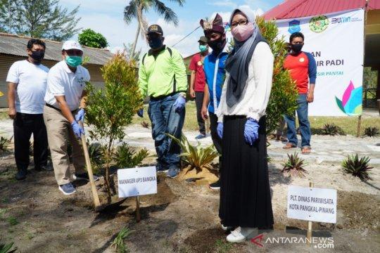 PLN Babel bersama Pokdarwis tanam 1.000 pohon di Pantai Pasirpadi