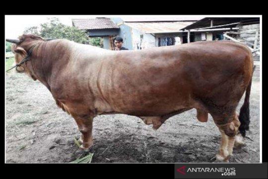 Halal Watch: Lebih baik potong hewan kurban di RPH