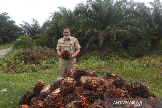 Harga sawit Riau naik dipicu membaiknya permintaan pasar internasional