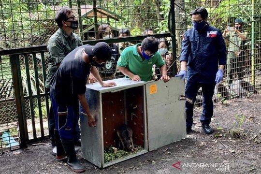 Indonesia terima repatriasi 91 satwa endemik dari Filipina