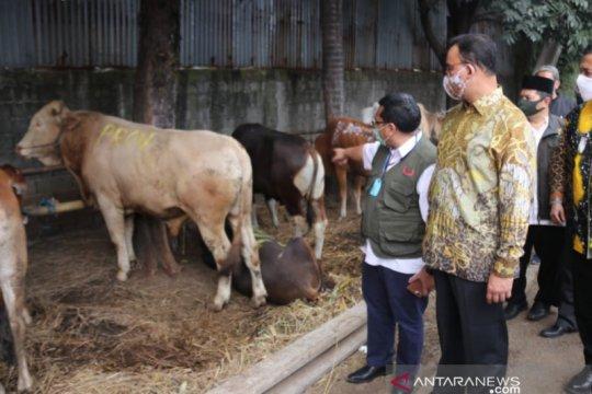 Anies serahkan 34 sapi untuk kurban