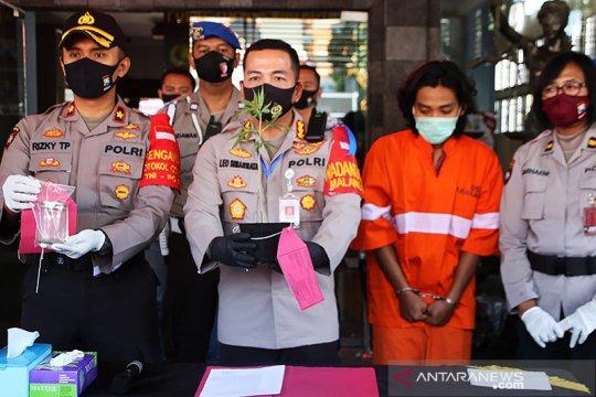 Polisi tangkap seorang mahasiswa yang tanam ganja di Kota Malang