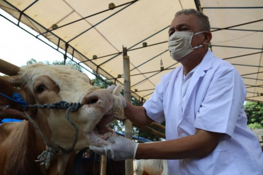 Sudin KPKP temukan 102 hewan kurban tidak sehat