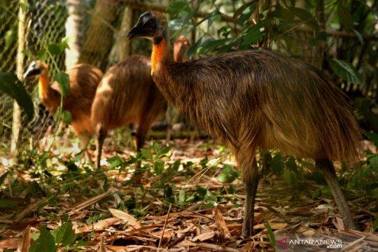 Repatriasi hewan endemik Indonesia dari Filipina