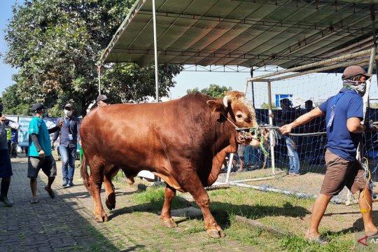 Al Azhar salurkan hewan kurban ke 75 pos di wilayah Jabodetabek