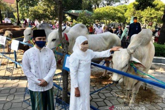 Sapi kurban dari Presiden diserahkan ke Masjid Al Akbar Surabaya