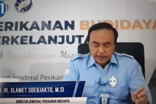 KKP nyatakan Indonesia siap jadi produsen ikan kobia