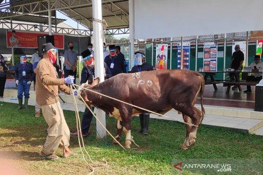 Idul Adha, Menteri Yasonna serahkan lima sapi ke lapas dan rutan