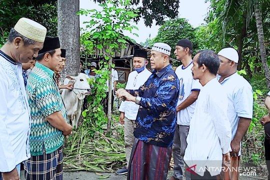 NasDem salurkan 139 sapi kurban untuk warga lima daerah di Sulteng