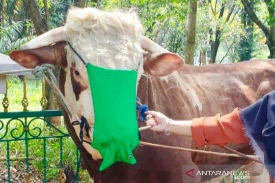 Sapi kurban Bupati Bogor dipasangi masker