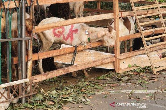 Idul Adha, Jakarta Barat potong 1.322 ekor hewan kurban