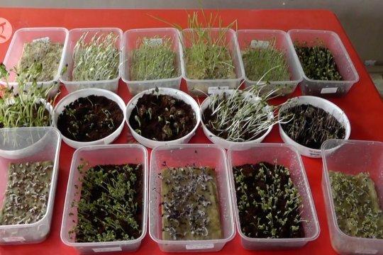 Budi daya sayuran dengan teknik microgreens
