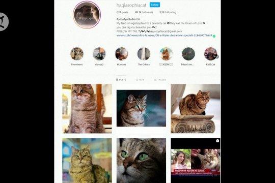 Kisah Gli, kucing ikon Hagia Sophia