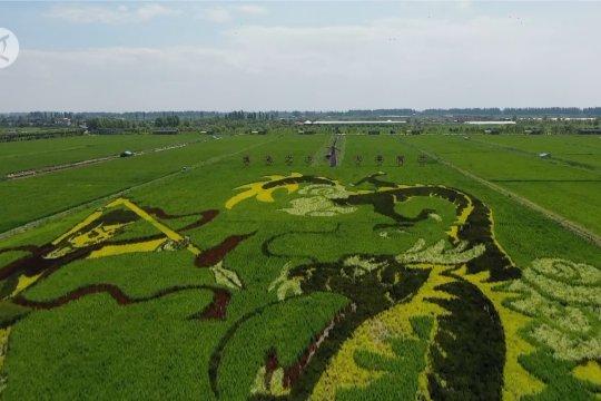 Petani di Ningxia, gunakan seni padi untuk pikat wisatawan