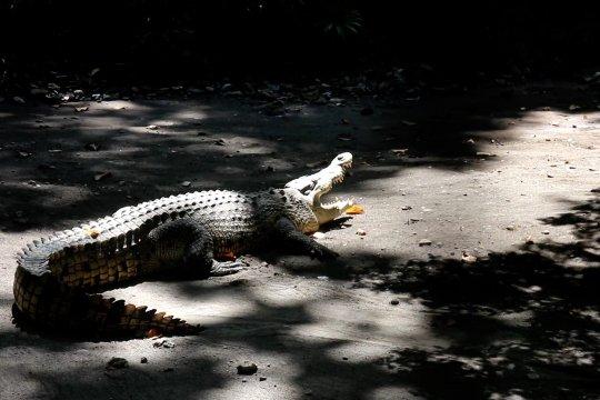 Kebun Binatang Surabaya kembali dibuka