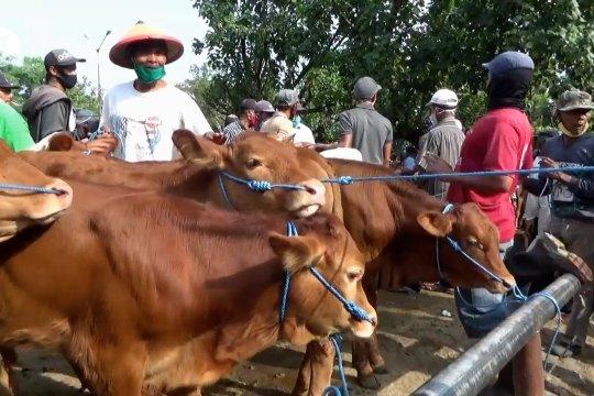 Penjualan hewan kurban di Ngawi turun hingga 50 persen