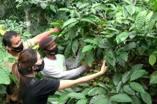 Edukasi petani kopi tingkatkan kualitas kopi