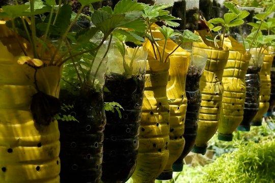 Mengubah barang bekas menjadi kebun produktif