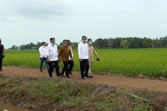 Presiden tinjau food estate di Kalimantan Tengah