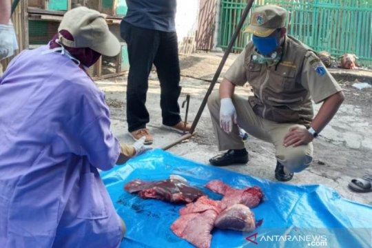 Puluhan kilogram organ kurban tak layak ditemukan di Jakarta Utara