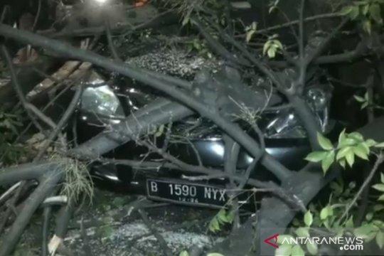 Tiga pengendara terluka akibat tertimpa pohon tumbang di Jaktim