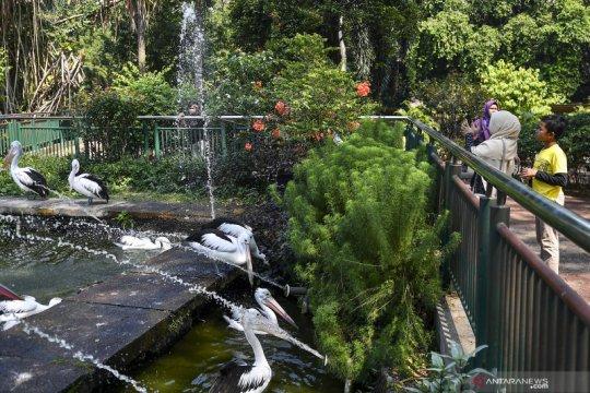 Libur Idul Adha di Taman Margasatwa Ragunan
