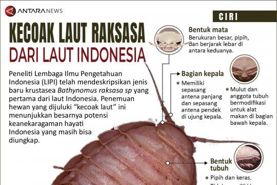 Kecoak laut raksasa dari laut Indonesia